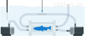 多通道水生生物呼吸代谢测量系统