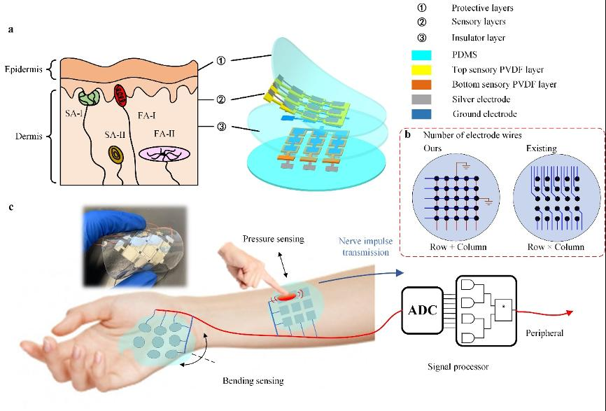 哈工大(深圳)聯合香港城市大學團隊提出新型柔性觸覺傳感器陣列