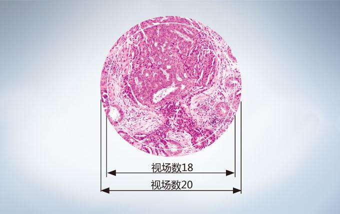 奥林巴斯CX23生物显微镜视场数